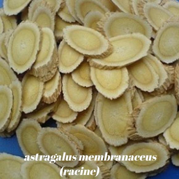 galerie astragalus membranaceus racine