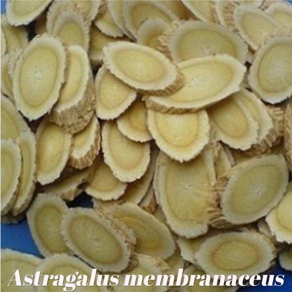 galerie astragalus membranaceus