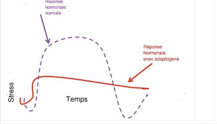 adaptogene illu II