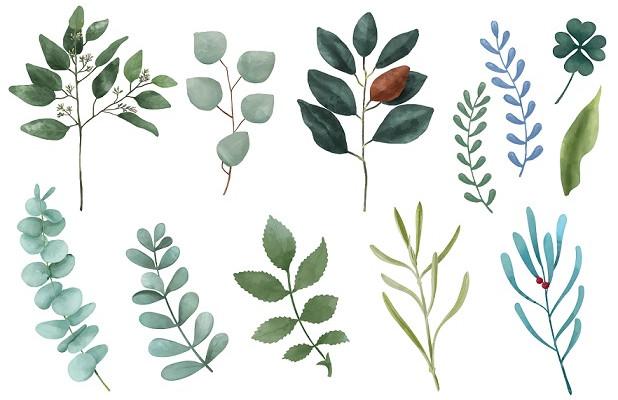 extrait-de-plantes